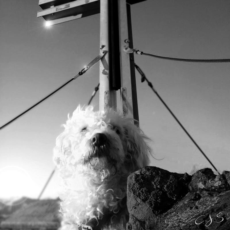 Fuschlsee mit Hund geplante Wanderungen mit Hund