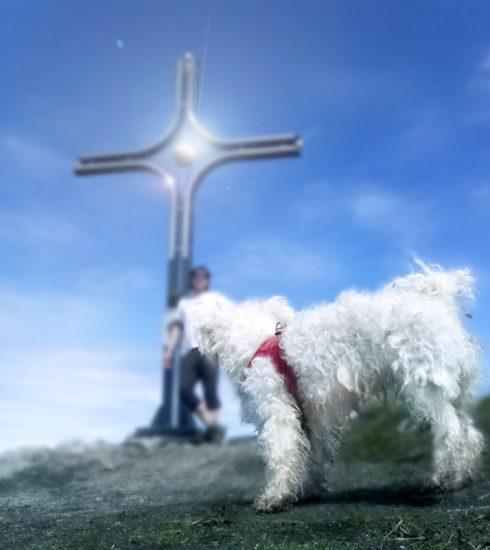 Bergwanderung mit Hund zum Wieserhorn