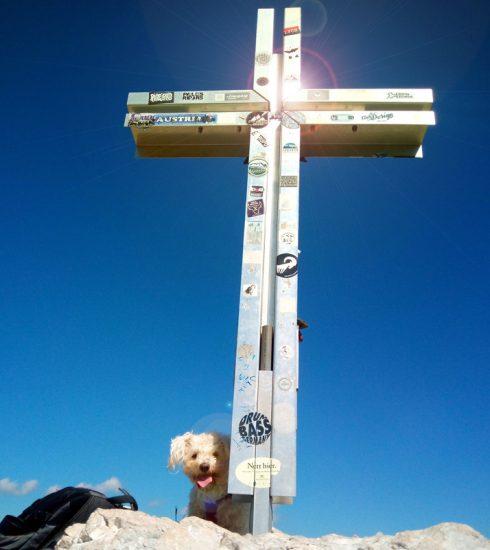 Bergtour mit Hund auf die Drachenwand
